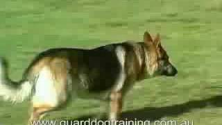 Guard Dog Training Centre - Obedience Training