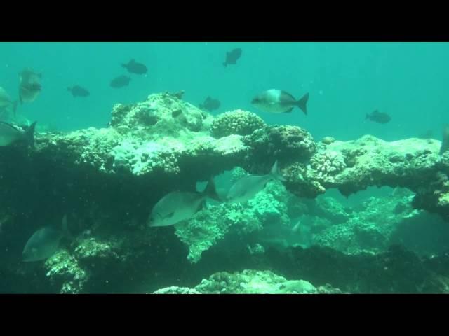 Kauai Dive Sites - Tunnels Beach