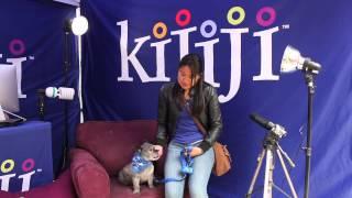 Cairn Terrier, Pepper - June 8, 2013