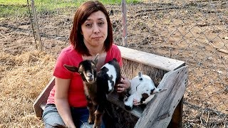 So Much for WAITING! I Hope GINA & Baby Goats AGREE