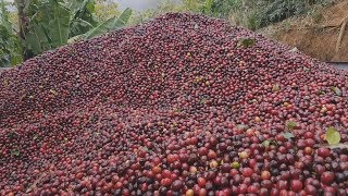 Costa Rica's coffee business joins the battle to cut down carbons