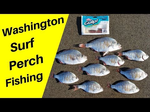 Washington Surf Perch Fishing