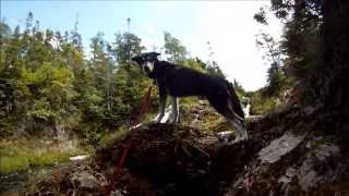 Wolf Pack-Adopt A Dog