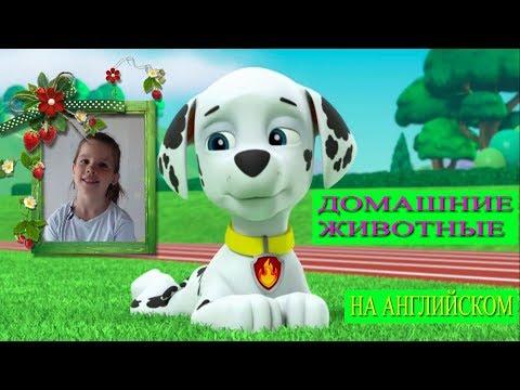 🐶 Английский язык для детей. Домашние животные