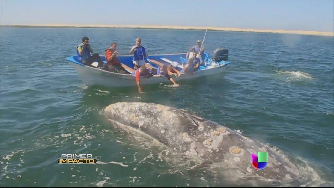 el acuario natural ms grande del mundo est en mxico