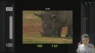 PS3 하쿠나 마타타 57 대자연의 명조연, 희귀한 파…