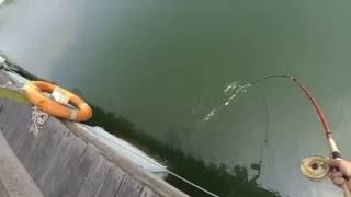 20160806 香港釣魚場 水中天魚排 落入之旅