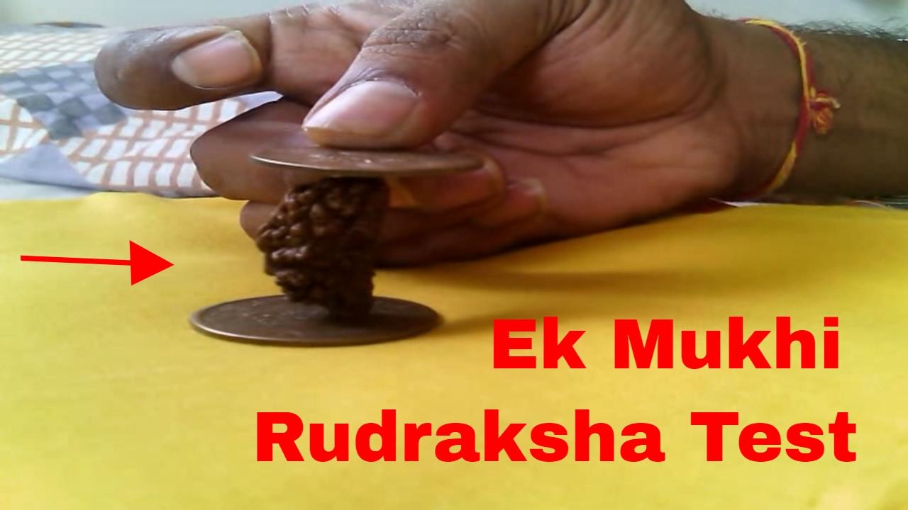 ek mukhi rudraksha ek mukhi rudraksha test 1 mukhi