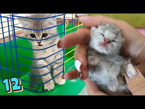 Спасение котенка превратило его в маленького!! Что сделал кот Макс? Галчата тв