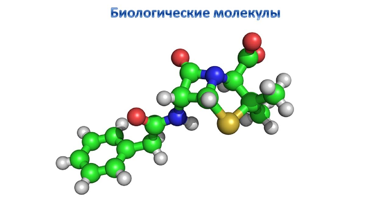 biological molecule Transcript of biological molecules: the building blocks of life biological molecules lipids carbohydrates proteins the building blocks of life all of these molecules make up who are are they are organic molecules main source of energy for living things also used for structure in plants & animals.