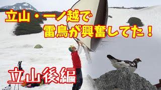 【4K映像】立山テント泊2日目!興奮する雷鳥を初めて見た!!【後編②】
