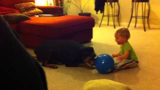 Rottweiler & Baby Playing With Ball