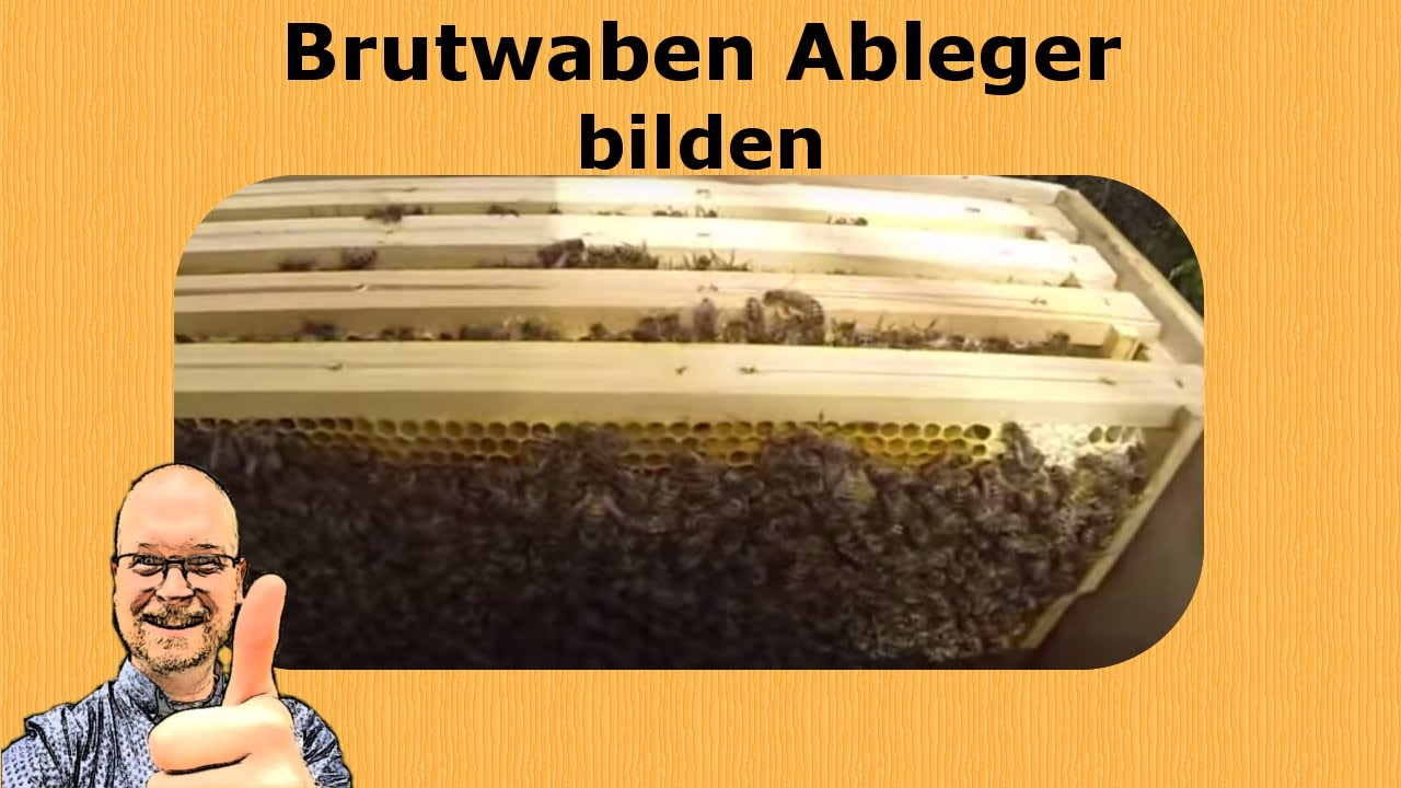 bienen brut ableger bilden youtube. Black Bedroom Furniture Sets. Home Design Ideas
