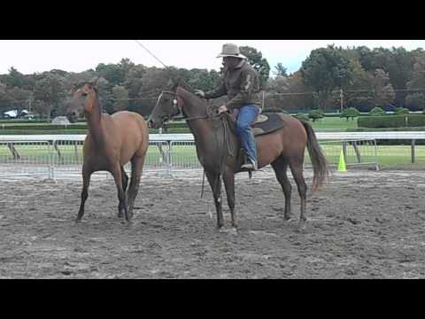 Guy McLean - Australian Horsemanship - Part 1 - 9/22/13