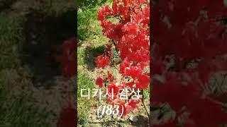 디카시모음 87