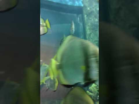 Fun times at Denver Aquarium(14)