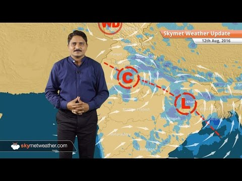 Weather Forecast for Aug 12: Good rains in Rajasthan, UP, MP, Bihar, light rain in Delhi, Haryana