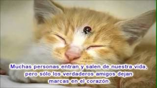 Watch Demis Roussos En El Nombre De La Amistad  Song For The Free Spanish  video