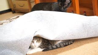 猫のモグラアタック