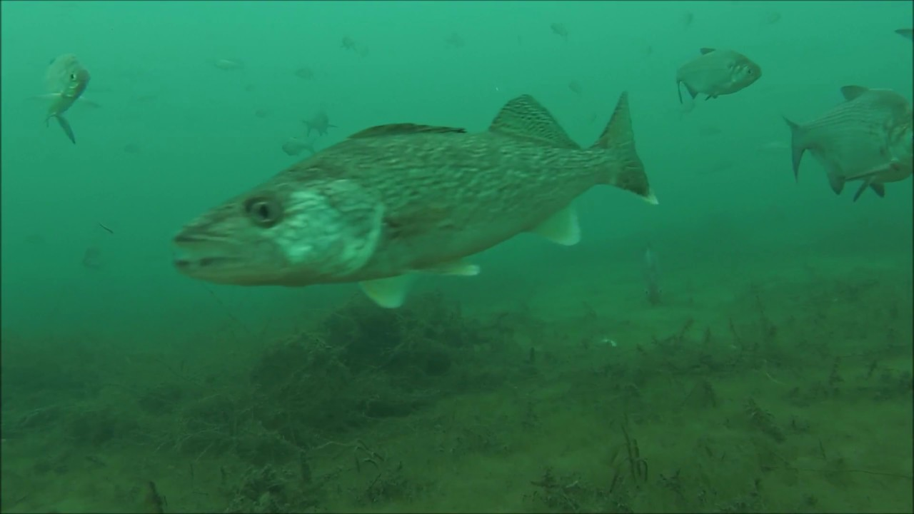(Underwater)view-Ice fishing Walleye&Steelhead non-stop ...  (Underwater)vie...