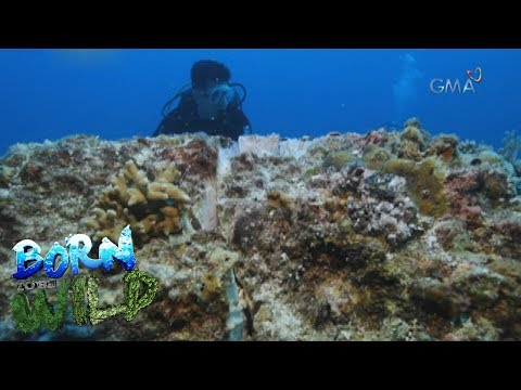 Born to Be Wild: Doc Ferds inspects Monad Shoal's recovery