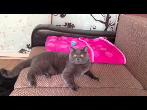 Забавная кошка воспитывает