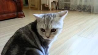 Кошки - драка. Смешное видео с животными. Кошачьи разборки.