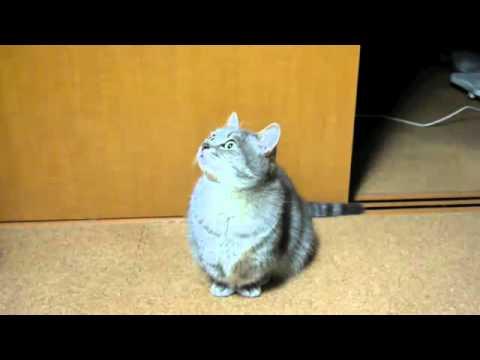 Chú mèo dễ thương nhất Youtube---Cutest cat Youtube.flv