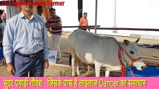 👍बदरी नस्ल (पहाड़ी गौवंश) के पंचगव्य ने किस प्रकार की इस व्यक्ति के Cancer की गांठे ठीक. अमृतुल्य👍