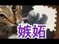 【嫉妬】ぬいぐるみを可愛がった時の猫の衝撃反応!