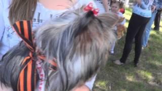Собачка с георгиевской лентой 9 мая