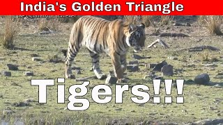 Tigers! - What to expect on a holiday in India's Golden Triangle - Episode 4