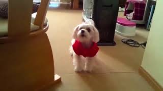 TOP 10 Funny dogs   barking dog