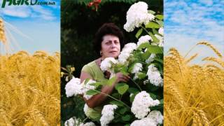 Скачать минус королев белые тюльпаны / виктор королев белые.