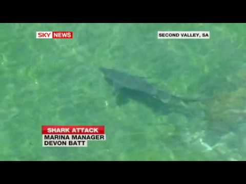 !!GREAT WHITE SHARK ATTACKS SCUBA DIVER IN AUSTRALIA!!