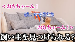 【モニタリング】飼い主が分身!複数の方向から聞こえる声に愛犬は飼い主を見つけられる?