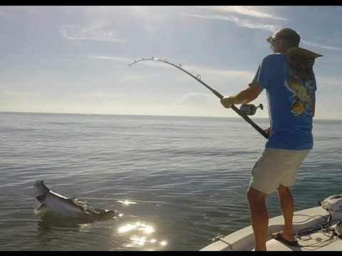 Fishing Pogy pods for Big Tarpon in North Florida