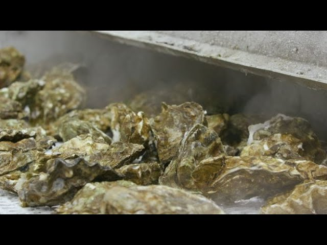Taylor Shellfish and Sea-Tac Airport  - Buy American