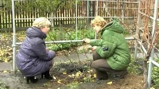 Обрезка винограда 2-3 г. Тетянина садиба 2012
