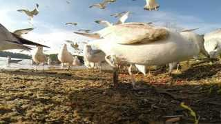 Gopro Birds Feeding Outside
