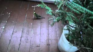 Котята и попугай