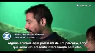 Aquário de Madri decora tanque de tubarões para o Natal