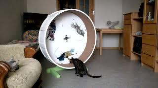 Колесо для кошки купить 89263867040 Иван