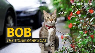 Tiong Bahru's famous community cat, Bob
