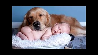 Cute Babies Laughing Hysterically at Dogs ★ Funny Kids Compilation