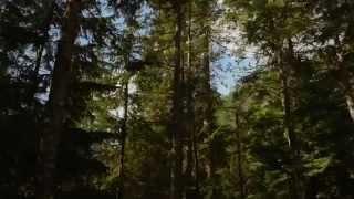 Сумерки 4. Сага. Рассвет.Часть 2 Русский трейлер '2012'. HD