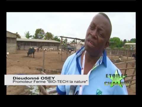 TV CONGO - Emission étoiles des champs - Exploitation Osey