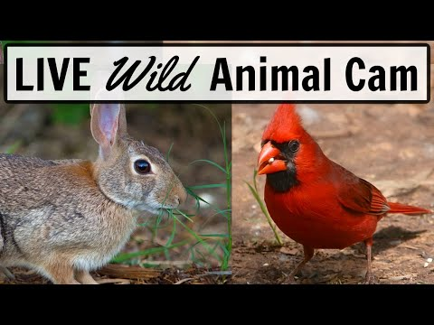 LIVE Animal Cam - Ohio (*Clear Night Vision*)