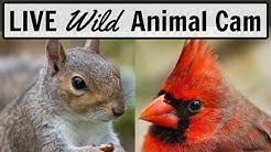 LIVE Animal and Bird Cam - Ohio