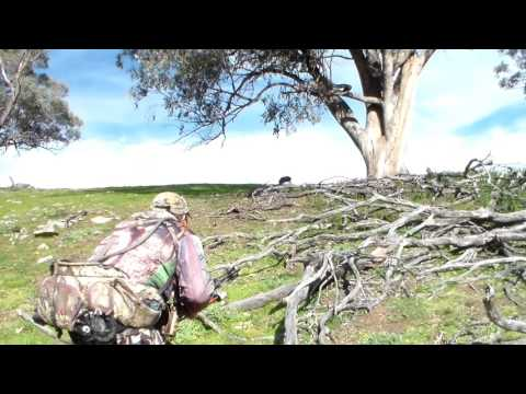 Bowhunting The Nsw Ranges 2